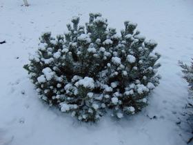 Bukowo Zima 2016 (3).jpeg