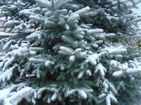 Bukowo Zima 2016 (6).jpeg