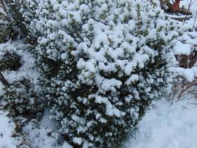 Bukowo Zima 2016 (8).jpeg
