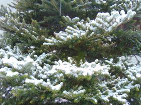 Bukowo zima 2016 (13).jpeg