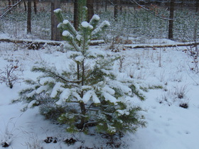 Bukowo Zima (2).jpeg