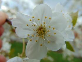 slidery wiosna II (3).jpeg