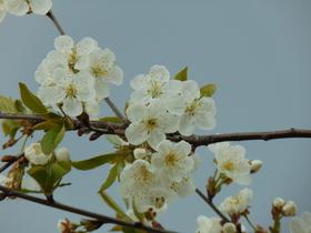 slidery wiosna II (4).jpeg