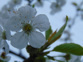 slidery wiosna II (7).jpeg