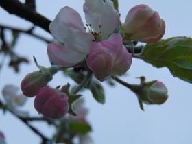 slidery wiosna II (9).jpeg