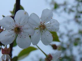 slidery wiosna II (10).jpeg