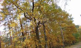 Bukowo jesień (2)x.jpeg