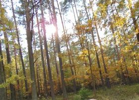 Bukowo jesień (3)x.jpeg