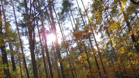 Bukowo jesień (4)x.jpeg
