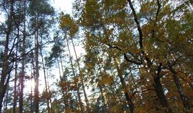 Bukowo jesień (5)x.jpeg