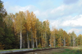 Bukowo jesień (12).jpeg