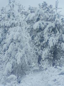 Bukowo zima (3).jpeg