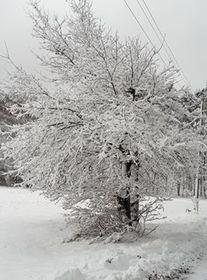 Bukowo zima (6).jpeg