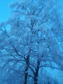 Bukowo zima (9).jpeg