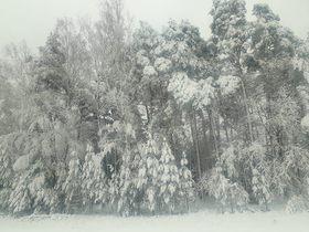 Bukowo zima (12).jpeg