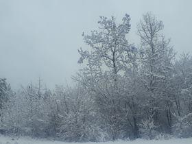 Bukowo zima (16).jpeg